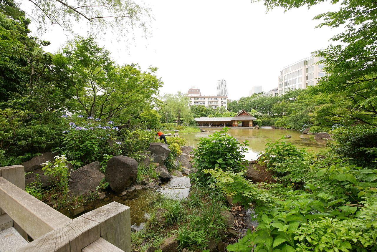 檜町公園の池を眺める写真