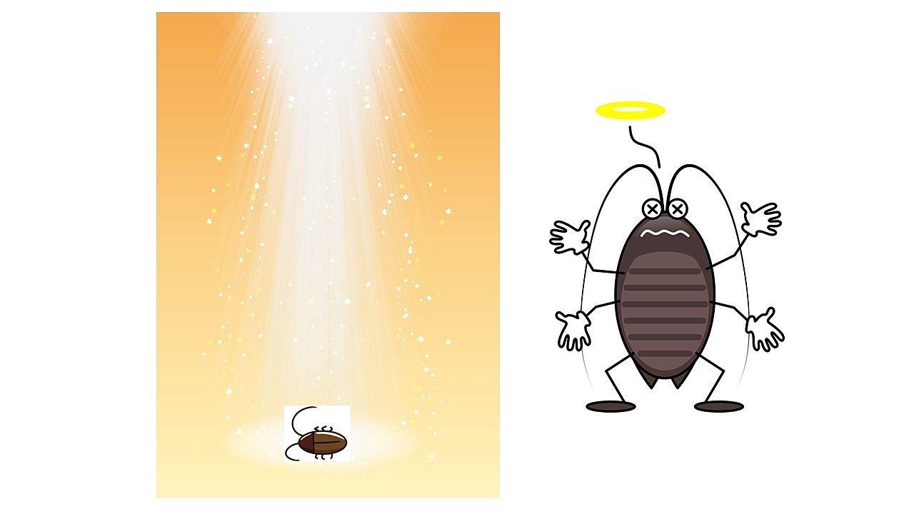 天に召されるゴキブリさん