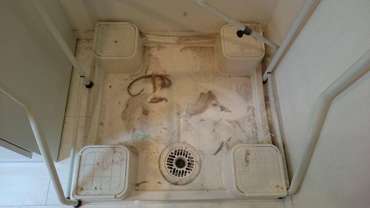 引越後に掃除をしなかった洗濯用防水パン