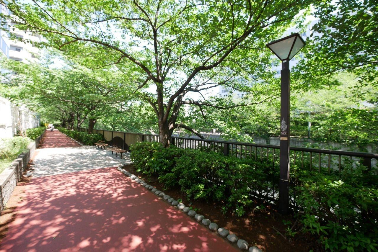 葉桜がやさしい目黒川の遊歩道