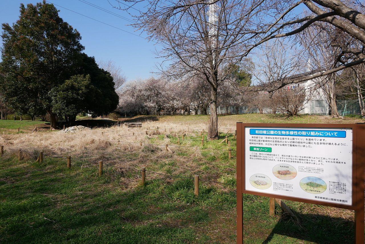 生物多様性の取組み1【和田堀公園】